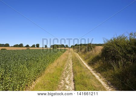 Bean Field And Bridleway