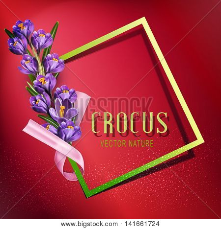 Vector greeting card with blue crocuses , frame, pink ribbon and place for text on a purple background