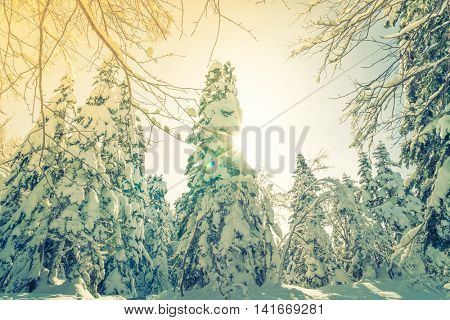 Winter trees covered with snow  ( Filtered image processed vintage effect. )