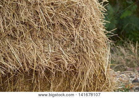 close up dry straw in country farm