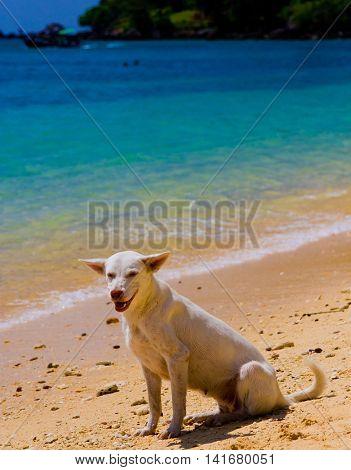 Salty Sea Dog Under the Sun