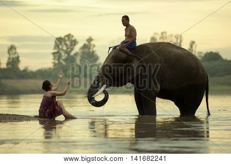 Elephant Mahout women and men are taking a bath in the river during the sunset at SurinThailand.