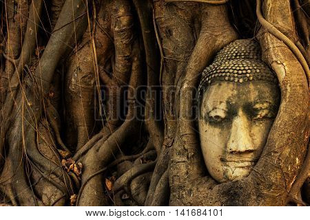 Buddha head entwined within the roots of a tree in Wat Mahathat Ayutthaya. It is one of the most recognisable images from Thailand.