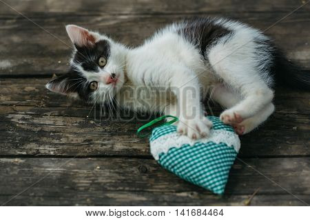 Cute Small Kitten Playing With Heart Pillow