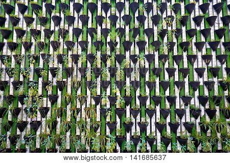 Green wall of plants in Ljubljana green capital of Europe 2016 Slovenia