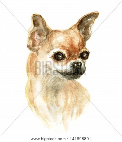 the chihuahua dog. Image of a thoroughbred dog. Watercolor painting.