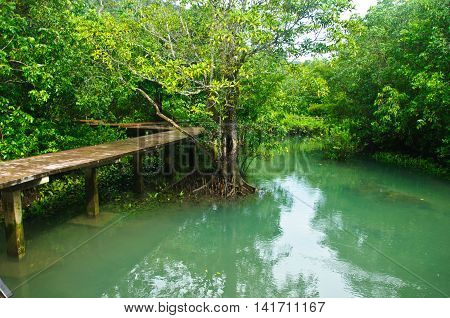 Khlong Song Nam clear tropical stream Krabi Province of Thailand.