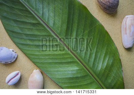 Banana leaf flat photo background with sea shells. Summer tropical backdrop. Horizontal image for wedding invitation birthday decor photo book cover. Exotic nature overview on beige craft paper.