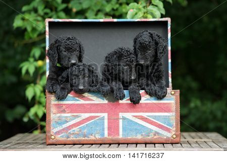group of puppies posing in a box