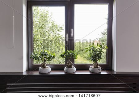Window Decor With Plants Idea