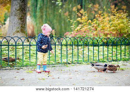 Girl Feeding Ducks Bread