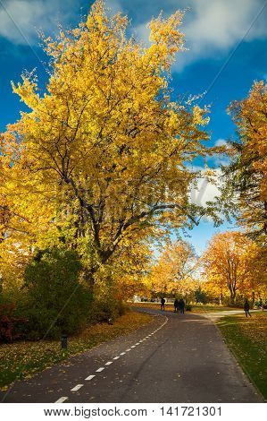Beautiful Road In The Autumn Park