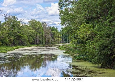 Green algae on the Raritan River in the Greenway Park in Somerset County New Jersey.