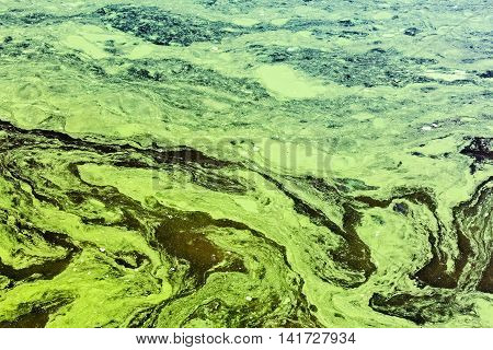 Polluted Waters By Toxic Chemicals With Green And Yellow Scum