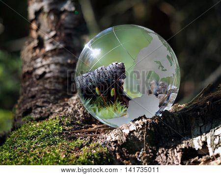The ball in the woods on a stump with moss. Glass - a material concepts and themes concepts environment nature. Beautiful reflection of moss and twigs in a bowl