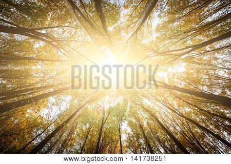 autumn forest trees. nature green wood sunlight backgrounds. .