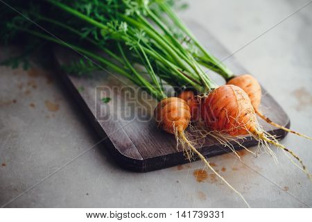 Bunch of small, round carrots (Parisian Heirloom Carrots)