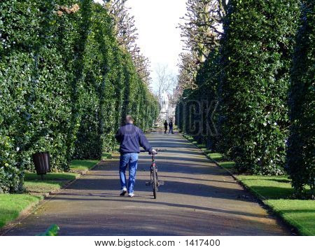 Man And Bike In Park