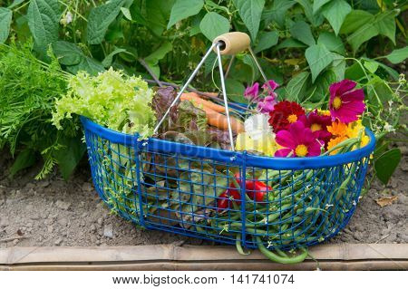 Blue harvest basket full with vegetables and flowers from the vegetal garden