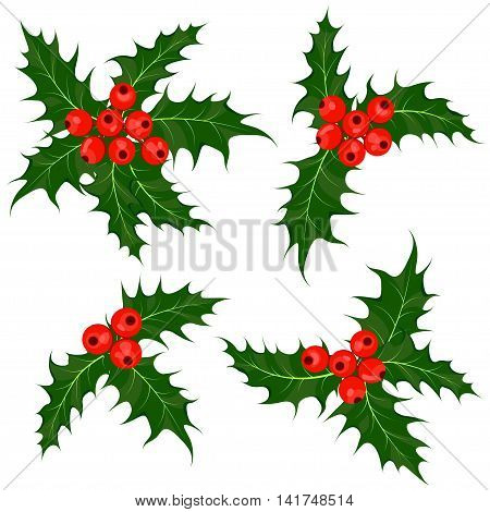 Holly berry or ilex plant. Mistletoe. Set of Christmas symbol vector illustrations