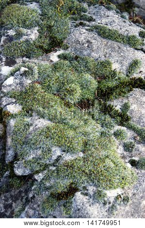 The surface of the stone, overgrown with moss