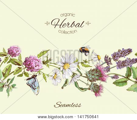 Vector herbal seamless horizontal border. Background design for herbal tea, natural cosmetics, health care products, homeopathy, aromatherapy. Best for packaging design.