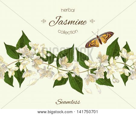 Vector jasmine seamless horizontal border. Background design for herbal tea, natural cosmetics, health care products, homeopathy, aromatherapy. Best for packaging design.