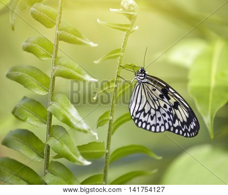 White butterfly on the flower