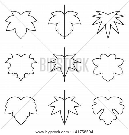 Leaf icon, Maple leave icon set thin line icon, autumn theme flat vector illustration