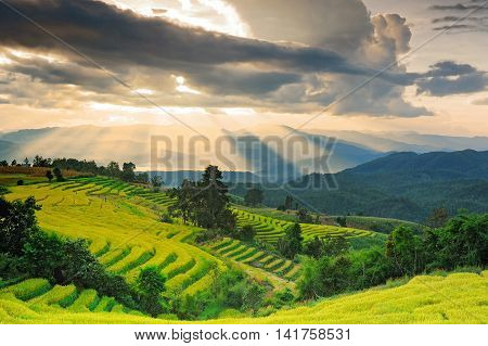 Rice Fields On Terraced Of Ban Pa Bong Peng, Maechaem ,chiangmai, Thailand.