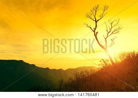 Dead Tree Silhouetted At Sunset On Mountain.