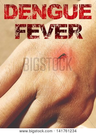 Mosquito sucking blood on human skin with red spot with word Dengue Fever