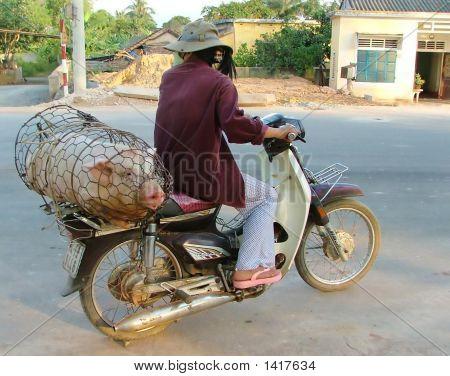 Hog Transport