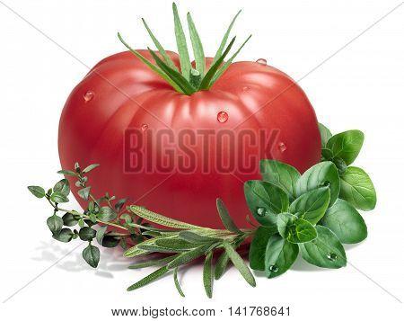 Tomato, Thyme,oregano,rosemary As Design Element, Paths