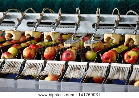Clean and fresh apples on conveyor belt in food processing facility ready for automated packing. Healthy fruits food production and automated food industry concept.