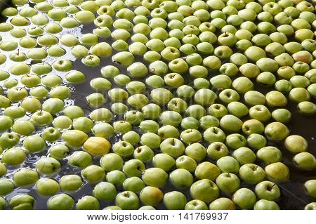 Ripe apples being processed and transported for size and color sorting and for packing in an industrial production facility. Healthy fruits diet and food industry concept and textured background.