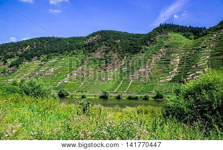 Mosel Valley In Summer With Mosel And Vineyards
