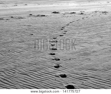Foot prints wandering in the sand at Jones Beach State park, New York
