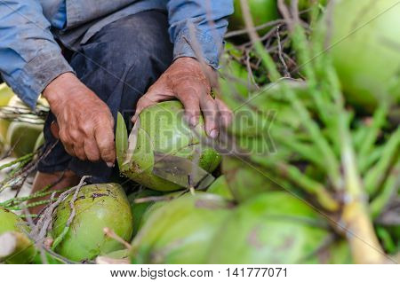 The old man cutting coconuts on the heap of coconuts. Motion Blur.