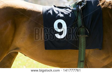 Horse racing close up on brown horse with number 9
