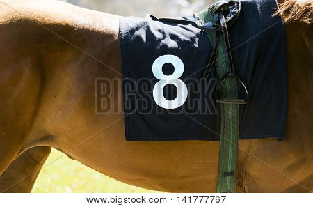 Horse Racing, Close Up On Brown Horse With Number 8