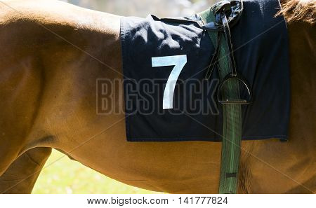 Horse Racing, Close Up On Brown Horse With Number 7