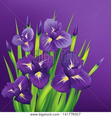 Irises flowers on violet background. Vector illustration