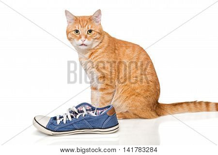 Red cat and blue sneakers isolated on white