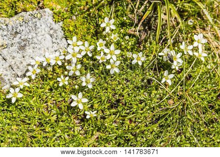 Blooming White Flowers.