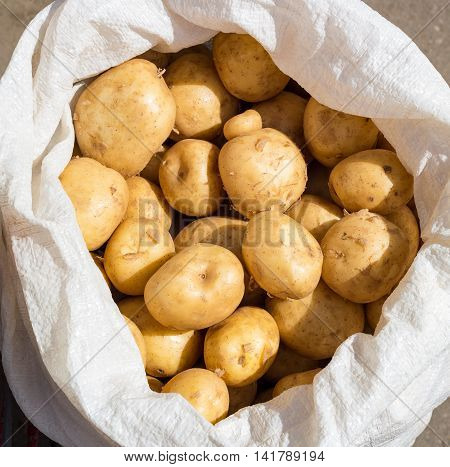 Fresh summer potatoes is in the white bag