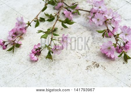 Aerial View Pink Japanese Prunus Serrulata Branches On Vintage Table