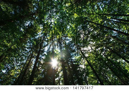 Shining sun through the green crowns of deciduous trees