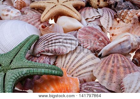 Colorful seashells and starfishes as background closeup