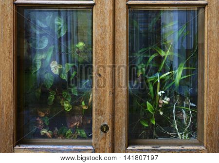 A lot of exotic house plants and flowers behind the wooden country window or door